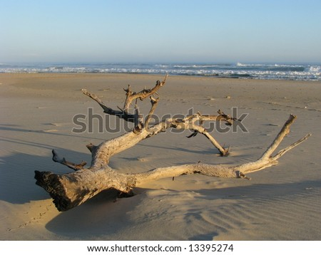 Driftwood that has washed up onto the beach after a violent storm - stock photo