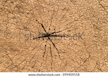 Driftwood Tree Rings With Cracks, A close up view of an weathered old driftwood stump that shows the radial pattern  - stock photo