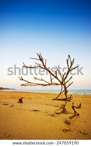 Driftwood washed up on the sandy shore. - stock photo