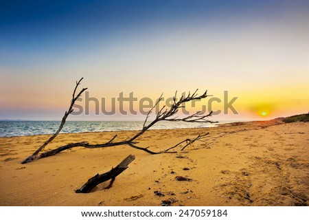Driftwood washed up on the sandy shore at sunrise. - stock photo