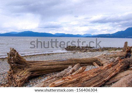 Driftwood washed up on the shore - stock photo