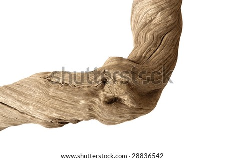 Driftwood with strong twisted grain and knots on white background with clipping path - stock photo