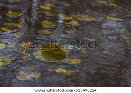 Stock images royalty free images vectors shutterstock for Puddle of fish