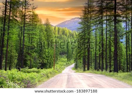 Drive through pine woods in Montana - stock photo