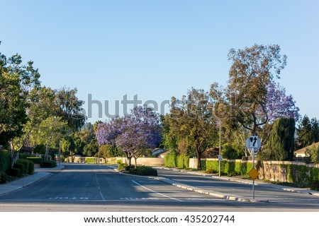 Drivei way to residential houses along Adolfo Street decorated with Purple Blue Jacaranda, Camarillo, Ventura county, CA - stock photo
