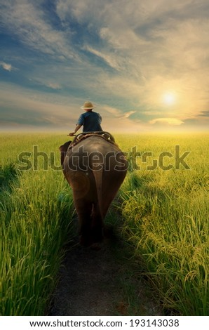 driven elephant in twilight  - stock photo