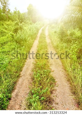 Driveway in the meadow Towards the Light - stock photo