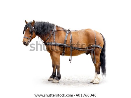 driving horse isolated on white - stock photo