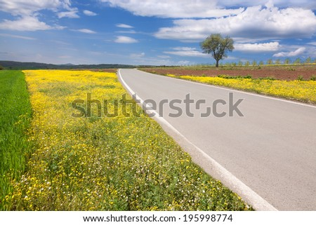 Driving on an empty asphalt road through the idyllic fields at sunny day - stock photo