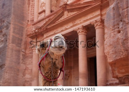 Dromedary (Camelus dromedarius), waiting for tourists at Al Khazneh (the treasury).  Focus on the whiskers. Most famous building of the ancient Nabatean city of Petra Central Jordan. - stock photo
