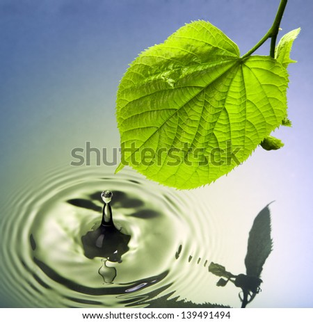 drop falling onto water surface from a green leaf - stock photo