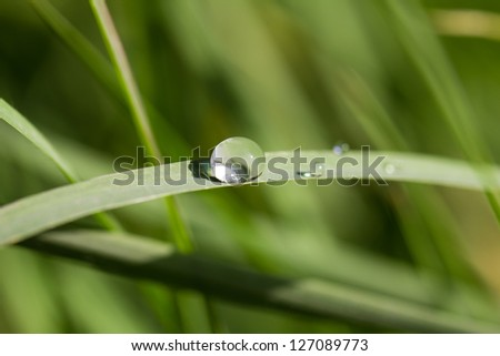 drop of dew on the grass. macro