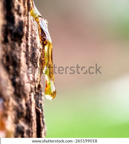 Drop of Resin on Tree Bark - stock photo