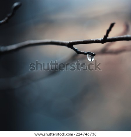 drop of water after rain in autumn forest on sunrise background