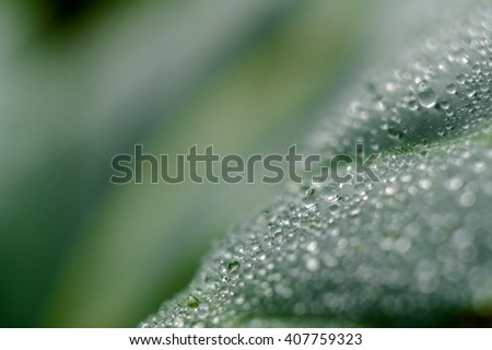 Drop of water on green leaf