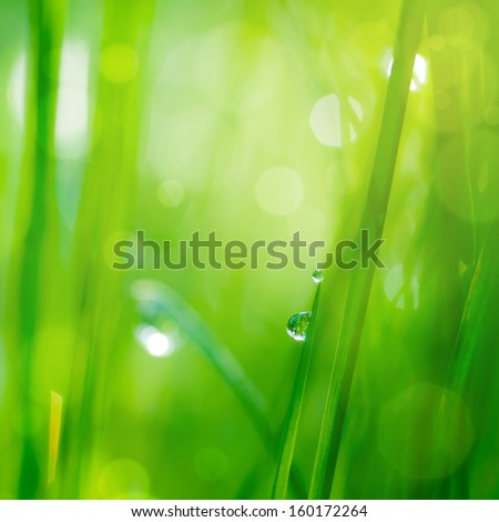 drop on grass and green background with natural bokeh, soft focus - stock photo