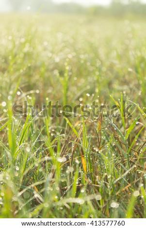 drop on grass field - stock photo