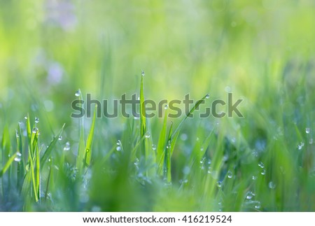 Droplets of dew on the grass glowing in the morning sun for  create a charming picture - stock photo