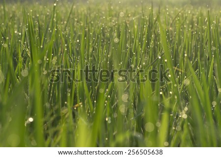 Droplets of dew on the green grass, shallow depth of field, natural eco background - stock photo