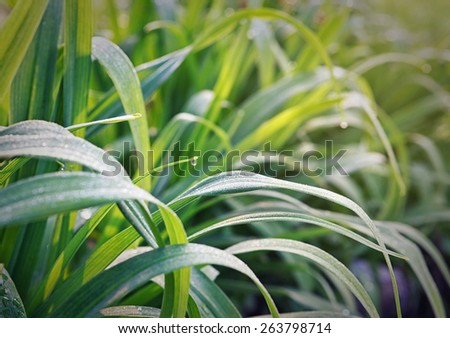 droplets on green grass  - stock photo
