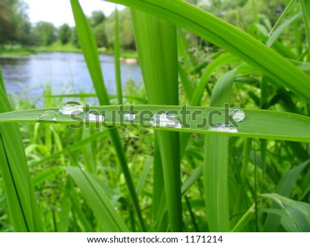 Drops of a rain on a grass - stock photo