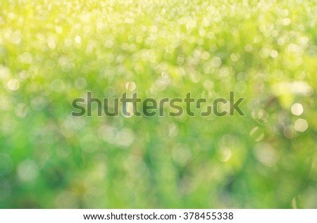 drops of dew on a green grass bokeh background - stock photo
