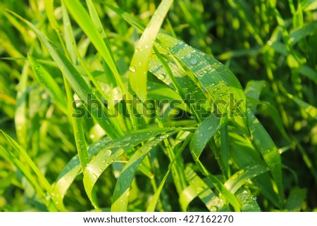 Drops of dew on green grass - stock photo