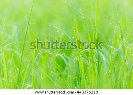 Drops of dew on the grass - stock photo