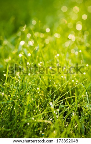 Drops of dew on the grass, lighted a morning light - stock photo
