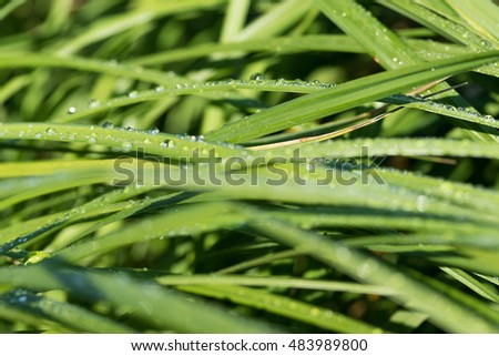 drops of dew on the green grass, bokeh