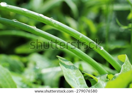 drops of dew on the stems of bow