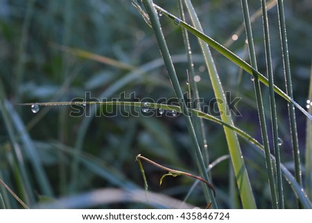 Drops of morning dew on the grass at sunrise