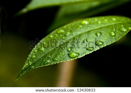 Drops of water on a leaf - stock photo
