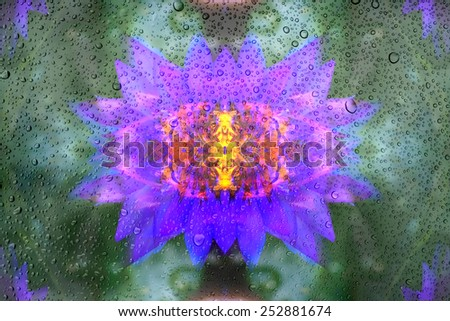 Drops of water on glass and abstract Background with bokeh defocused flip beautiful flowers - stock photo