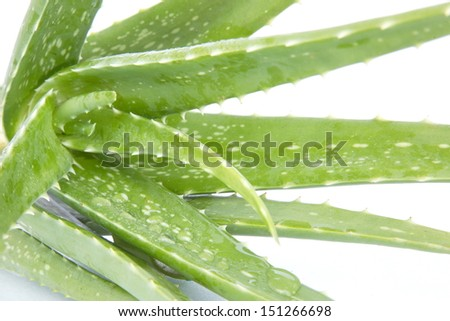 Drops of water on leaf of Aloe vera plant isolated on white  - stock photo