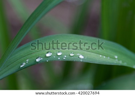 drops of water raining down on a green leaf lily