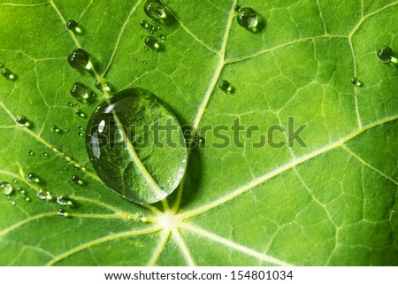 drops on a green leaf