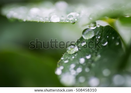 drops on a leaf 9