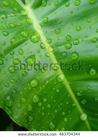drops on leaf after rain