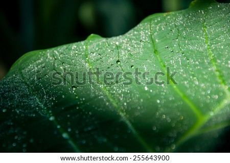 drops on the green leaf  - stock photo