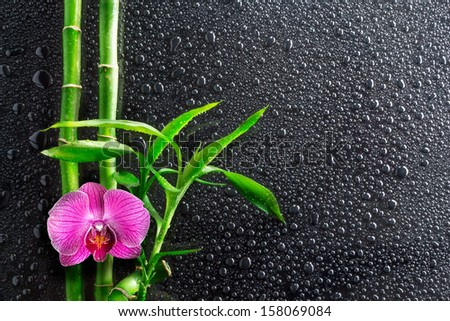 drops, orchid and bamboo on black - stock photo