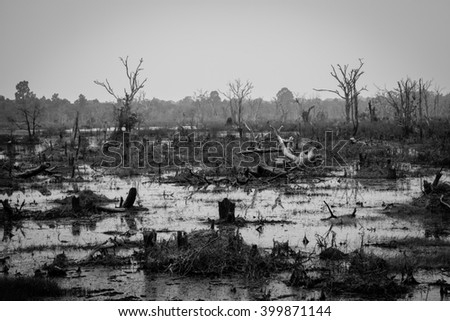 Drought and Deforestation Concept in Black and White - Ecology and Environment issue - stock photo
