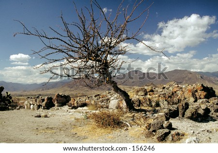 Drought: dead tree and rocks in arid landscape
