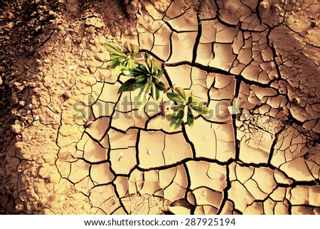 Drought, dry earth. - stock photo