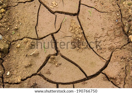 drought, one of the disaster to biology - stock photo