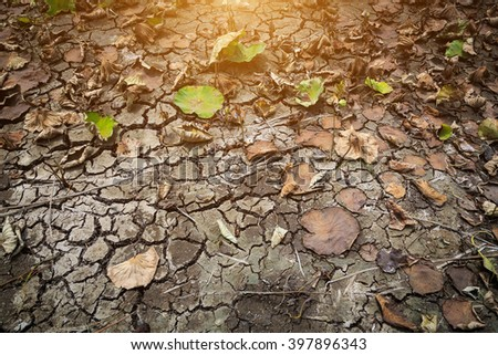 Drought, the lotus death on cracked dry ground during summer in Thailand