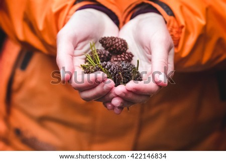 Drown pine-cones in the hand - stock photo