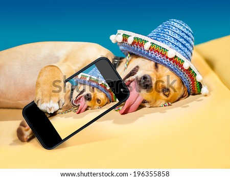 drunk chihuahua dog taking a selfie with smartphone - stock photo