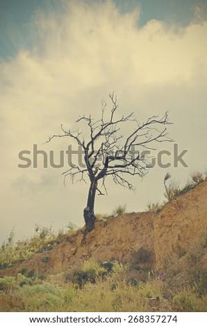 dry almond - stock photo