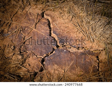 Dry and cracked land - stock photo